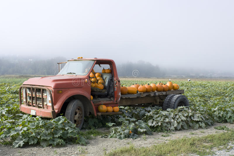 Old truck in pumpkin farm royalty free stock photo