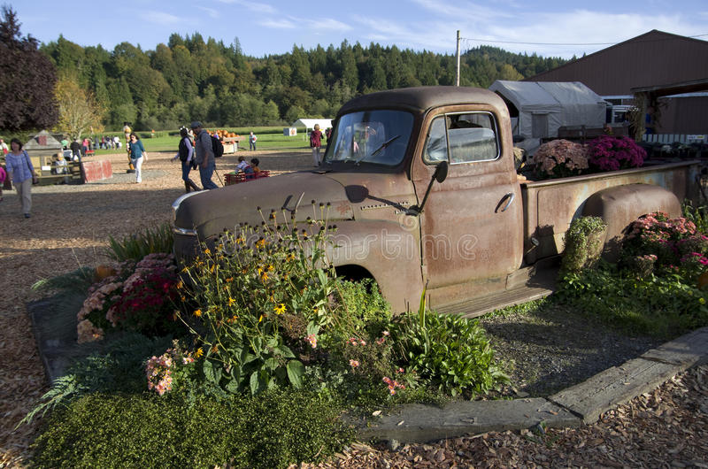 Old truck at pumpkin farm royalty free stock photo