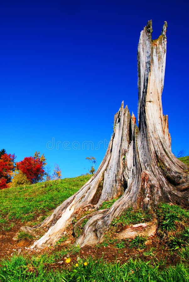 Download Old Trunk Royalty Free Stock Photos - Image: 26479218