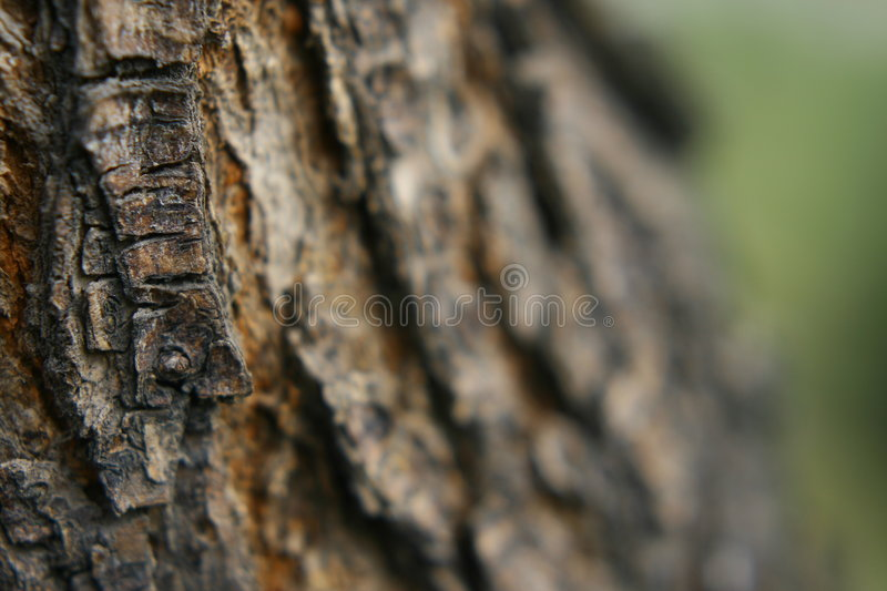 Old trunk royalty free stock photography