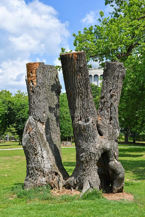 Old trunkated tree trunks in the woods royalty free stock photo