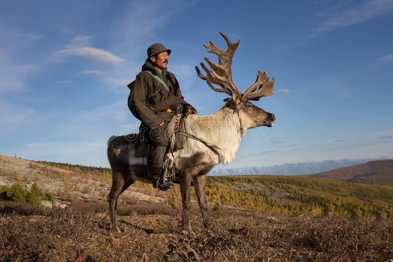 Old Mongolian man riding a reindeer. stock photography