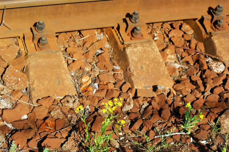 Old used railway tracks in and a small flower stock photo