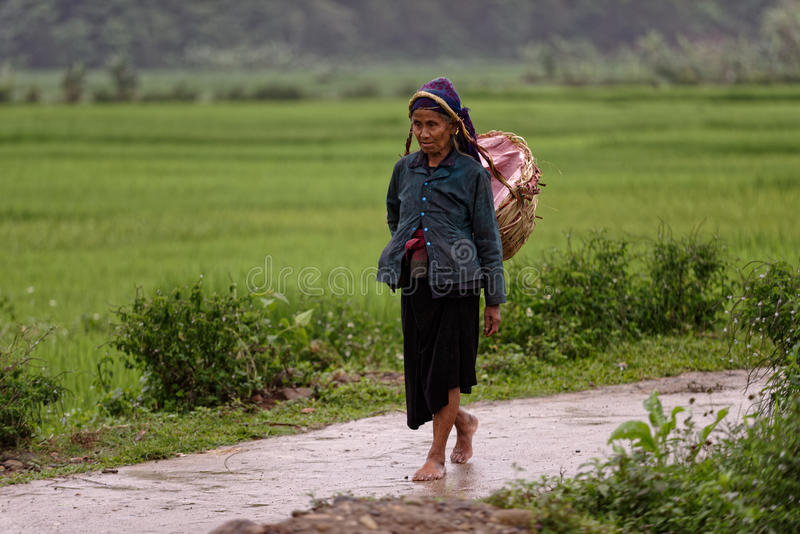 Old Vietnamese woman in Sa Pa valley. An old Vietnamese woman from the Thai tribe carrying a basket on a road passing through the rice fields in Sa Pa valley in stock photography