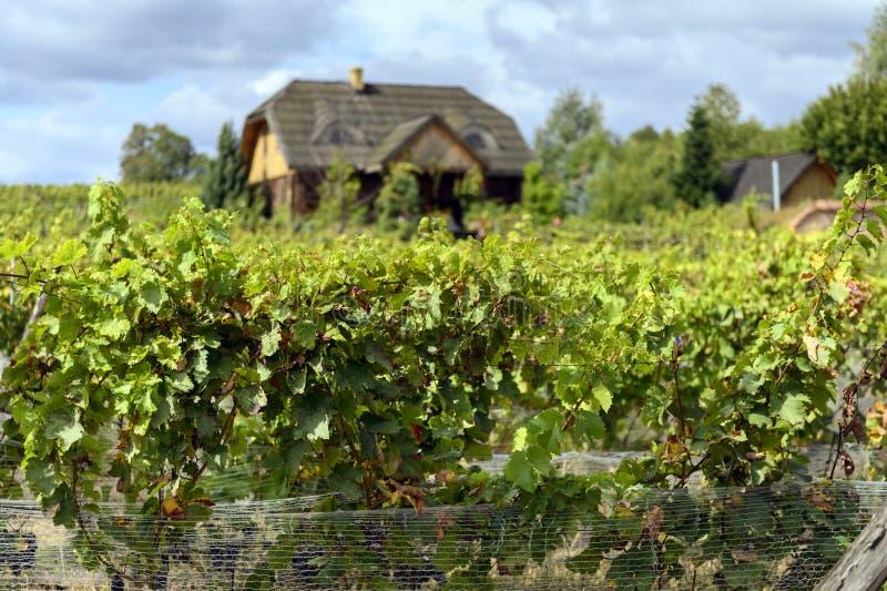 Old vineyard near Zielona Gora in Poland. Old vineyard and small house near Zielona Gora in Poland stock image