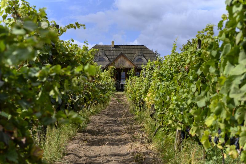 Old vineyard near Zielona Gora in Poland. Old vineyard and small house near Zielona Gora in Poland stock photos