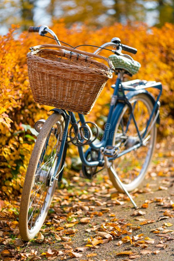 Old vintage bicycle with bicycle bin with yellow autumn trees on the background.  stock photos
