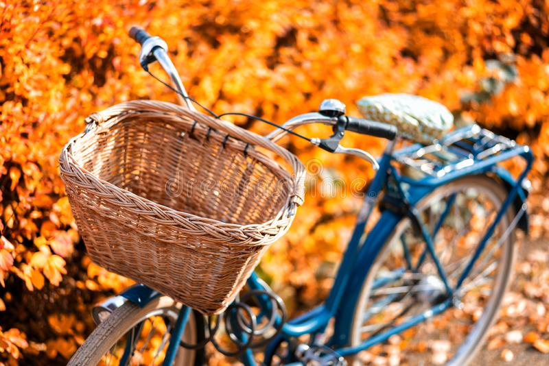 Old vintage bicycle with bicycle bin with yellow autumn trees on the background.  stock photography