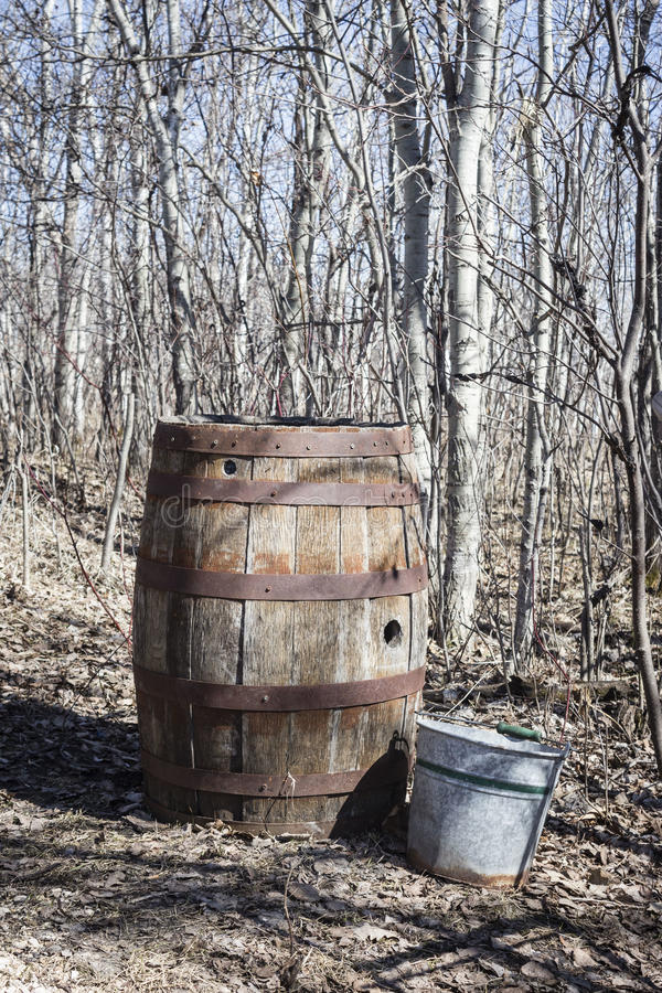 Old vintage rustic whiskey barrel. Vertical image of an old rustic vintage barrel with a tin pail sitting beside it on the ground with bare trees in background stock photo