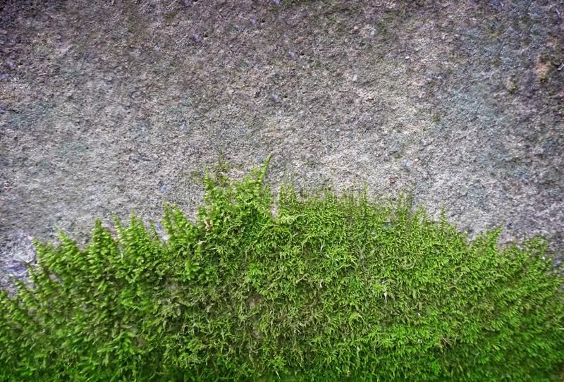 Old vintage stone wall with green water moss royalty free stock images