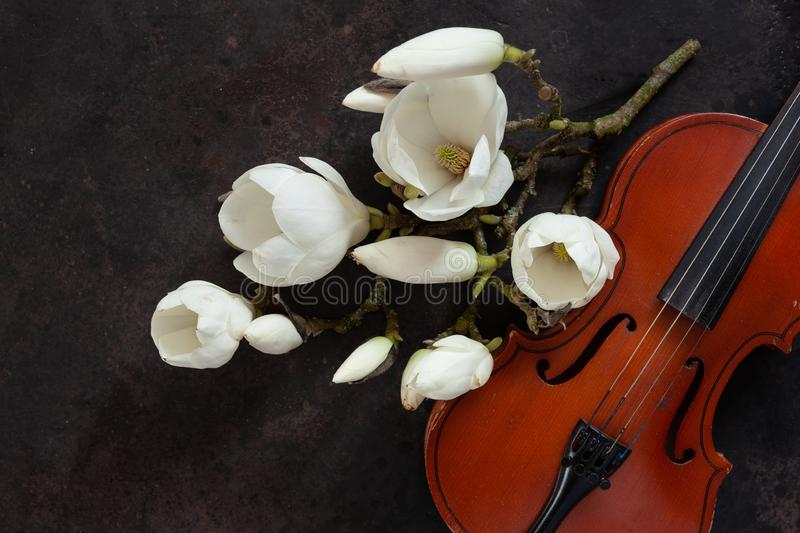 Old violin and blossoming magnolia brances. Top view, close-up on dark vintage background.  stock image