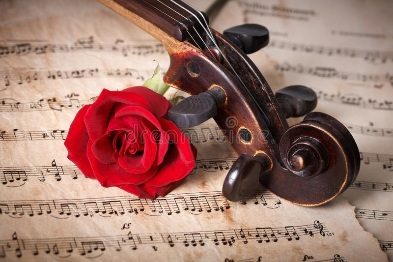 Old violin scroll with red rose royalty free stock photo