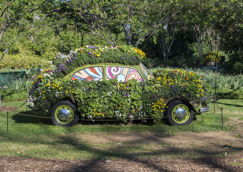 An old Volkswagen bug is covered with pansies at the Dallas Arboretum. A very old volkswagen bug car is covered with pansies of many colors at the Dallas royalty free stock images