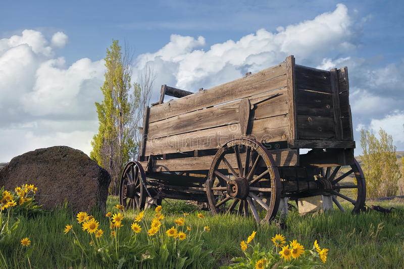 Old Wagon at Farm Ranch. Old Wooden Wagon at Farm Ranch in Washington in Spring Season with Balsamroot Wildflowers stock image