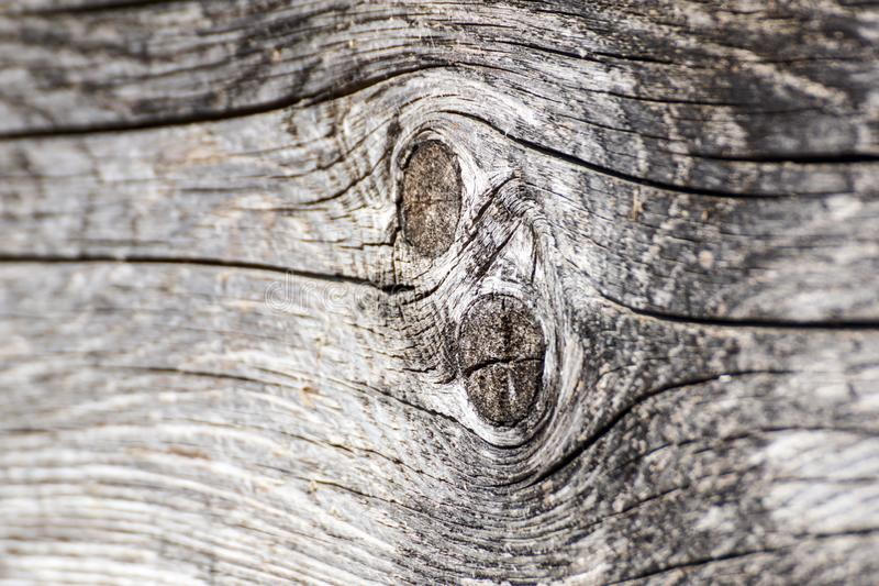 Old walnut tree trunk detail texture as natural background. stock photo