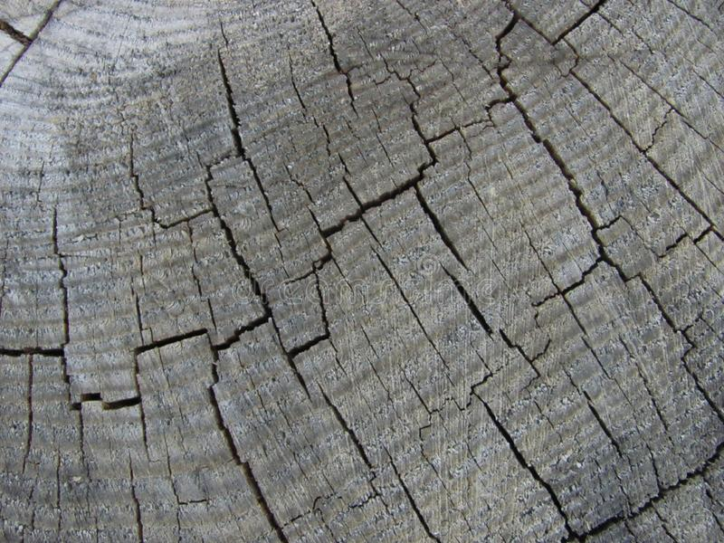 Weathered gray wood texture. Old weathered gray wood texture royalty free stock photo