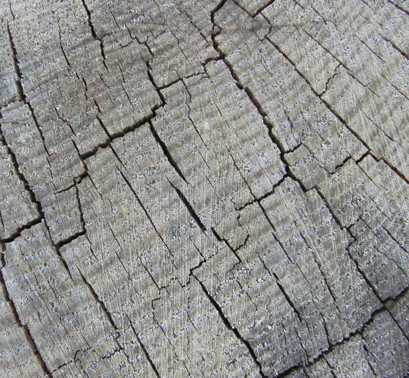 Weathered gray wood texture. Old weathered gray wood texture royalty free stock photos