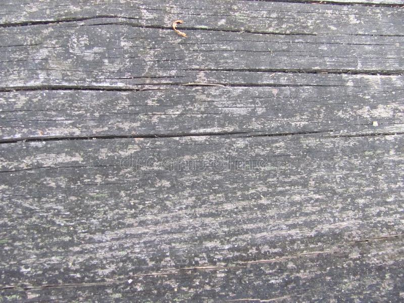 Weathered gray wood texture. Old weathered gray wood texture royalty free stock photography
