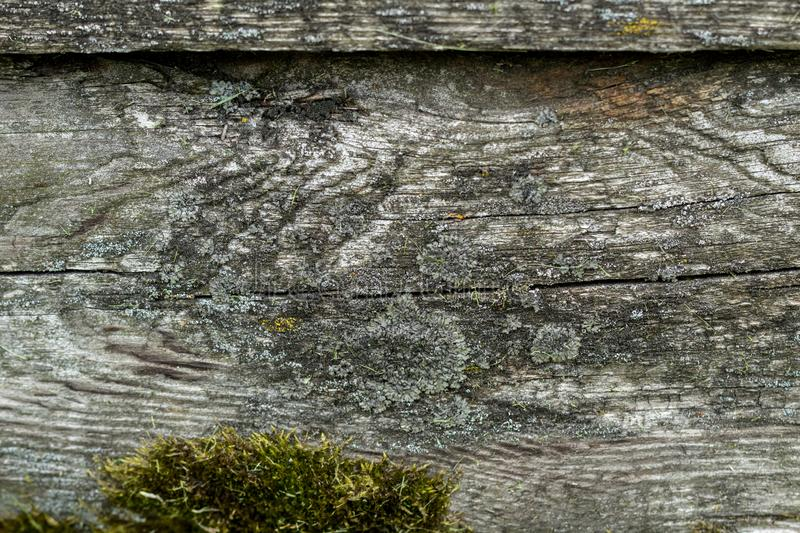 Old weathered wood plank with green moss background texture royalty free stock image