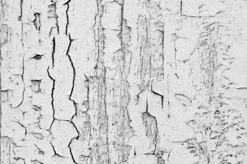 Old weathered wood texture with peeling white paint. Grunge background. Scratched white painted wooden background. Close up wooden royalty free stock image