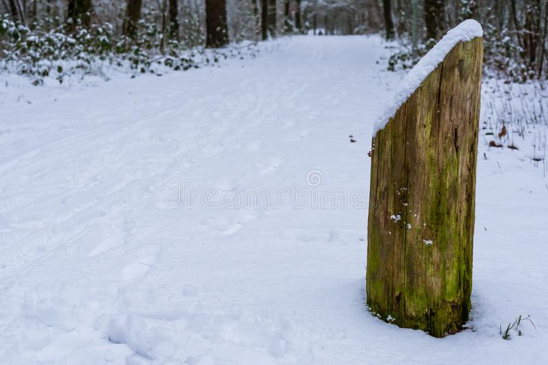 Old weathered wooden pole covered in snow, the forest during winter season stock images