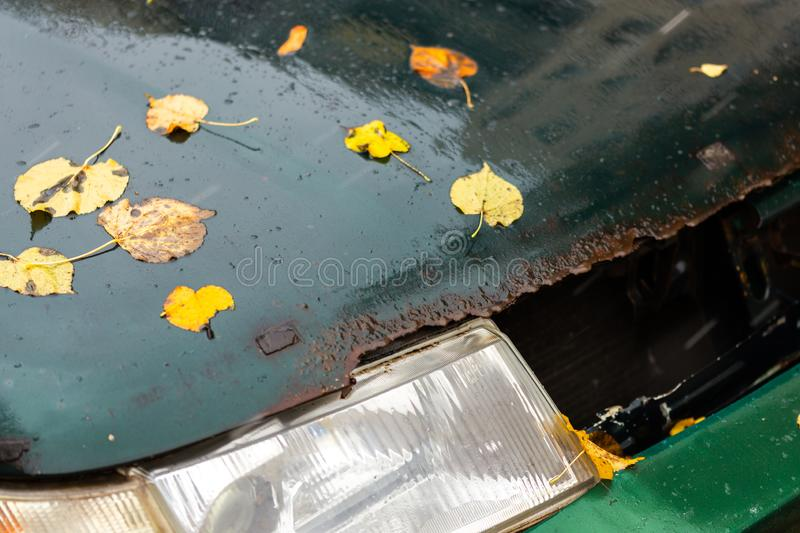 Old wet and rusted car bonnet with headlamp under autumn birch leaves royalty free stock photography