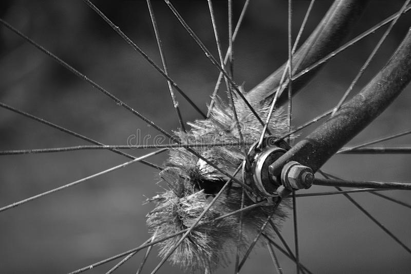 Old wheel of bicycle spoke detail isolated background. Used motion blurr for simulated motion wheel stock image