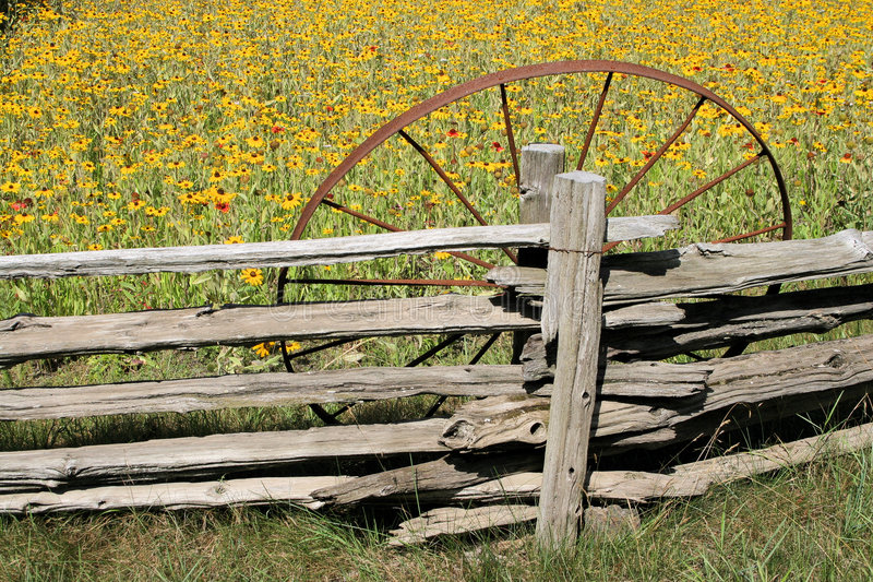 Old Wheel In Field stock images