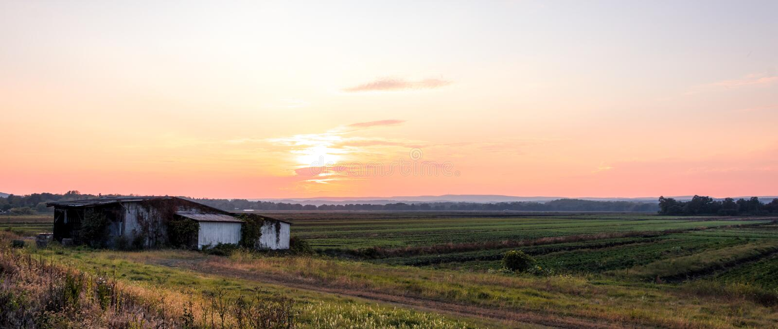 Old white barn covered in vines on a humble farm under late summer sunset stock images