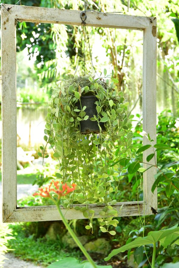The Old White Frame in the garden with Vintage mood royalty free stock image