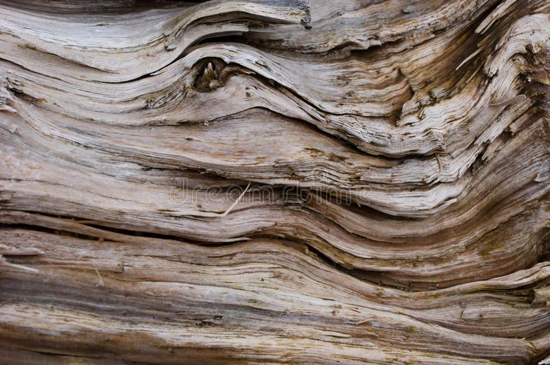Old white wood texture with heavy cracks stock photography