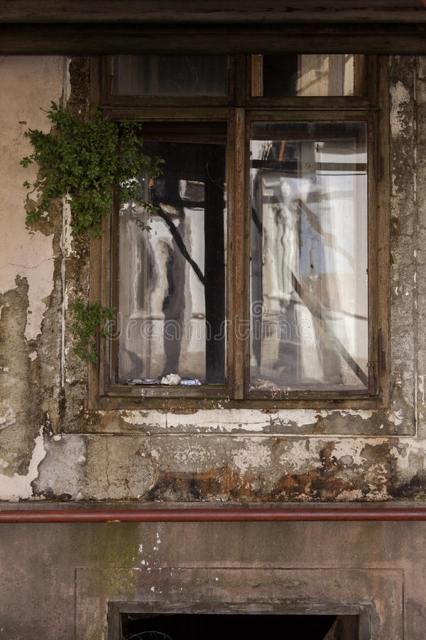 Old window. And green leaves royalty free stock photos