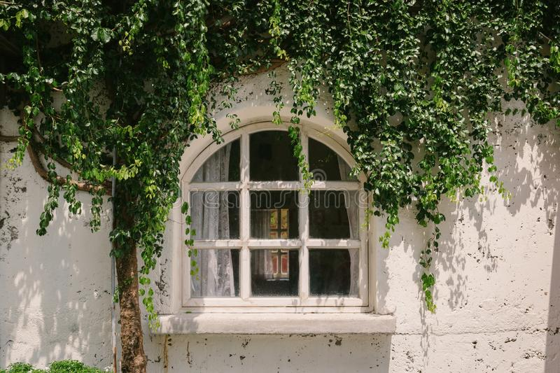 Old window with green plant cover and wall background royalty free stock photos