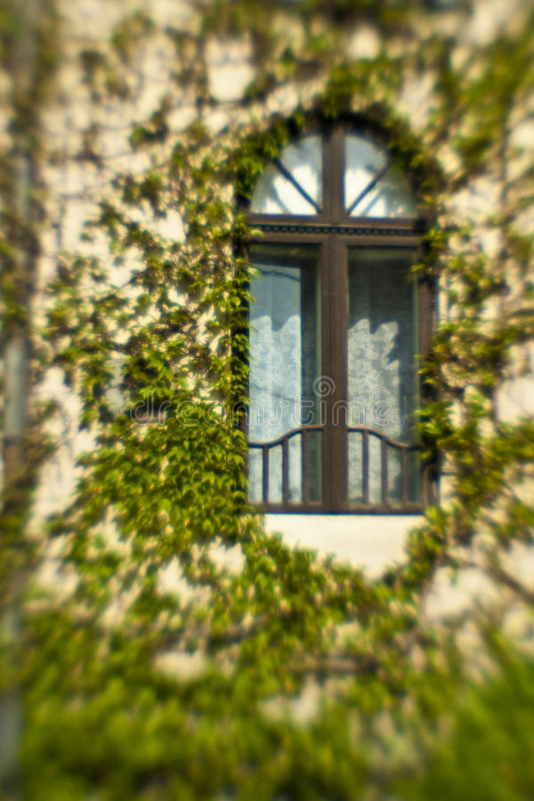 Download Old window with ivy stock image. Image of leaves, wall - 12734839