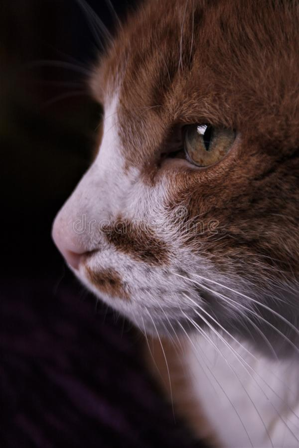 The old and wise cat royalty free stock photography
