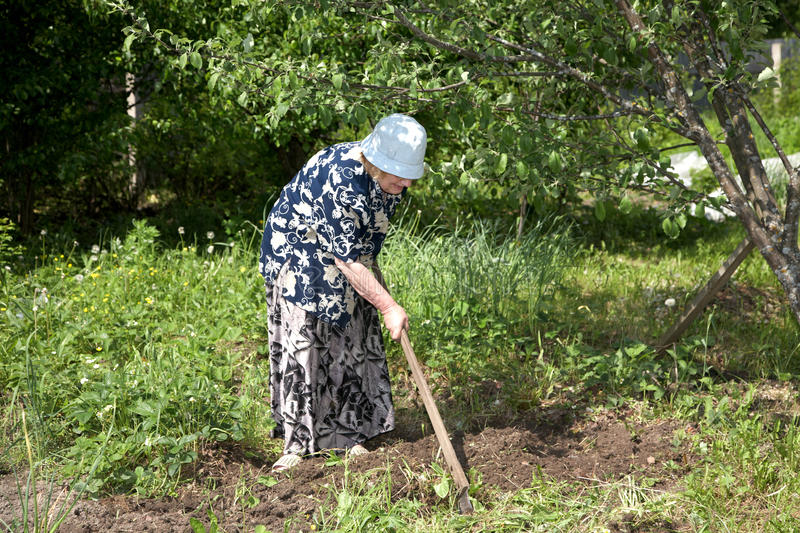 Download The Old Woman With A Chopper Works In Garden Stock Photo - Image: 14686760