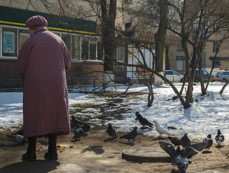 Old woman in a coat and beret feeding pigeons stock photo