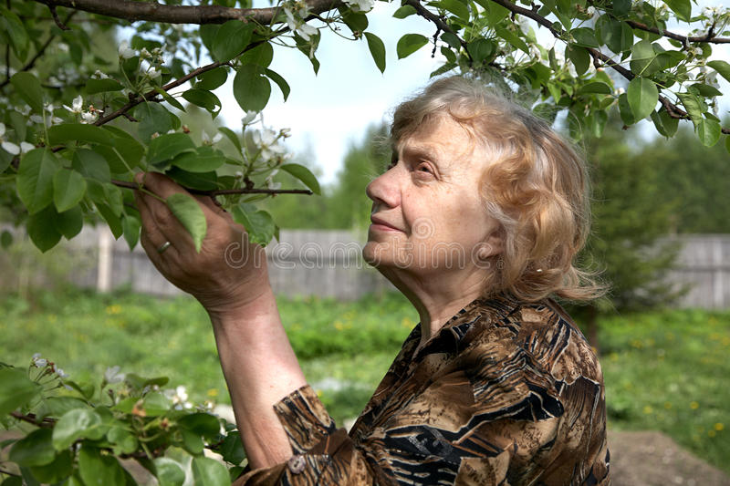 Download The Old Woman Considers Pear Flowers Stock Image - Image: 14686697