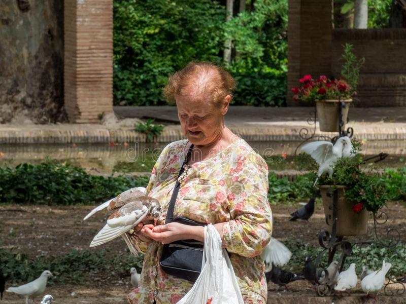 An old woman feeding pigeons in the park of Seville , Spain royalty free stock image