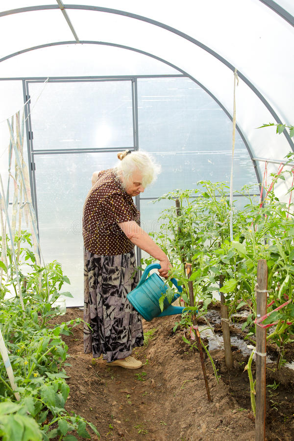 The old woman in a hothouse royalty free stock photo