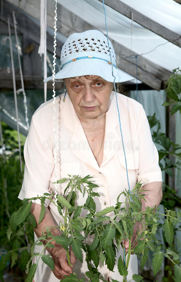The old woman in a hothouse at bushes stock photos