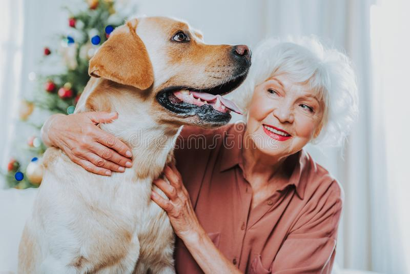 Old woman looking at a labrador at home stock photo