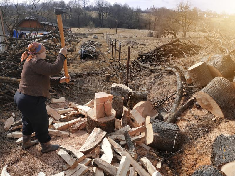 An old woman of a tavern shakes a firewood with an ax in the yard, prepares them for the winter. 2019 royalty free stock image