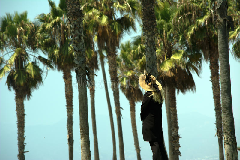 Old woman watching over palms stock photography