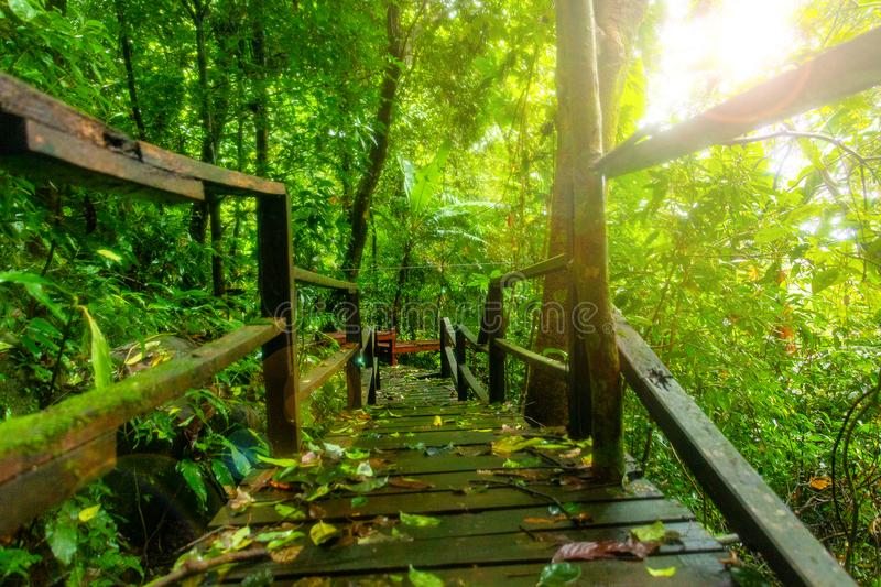 Old wood bridge and Sunshine in to rain forest. stock images