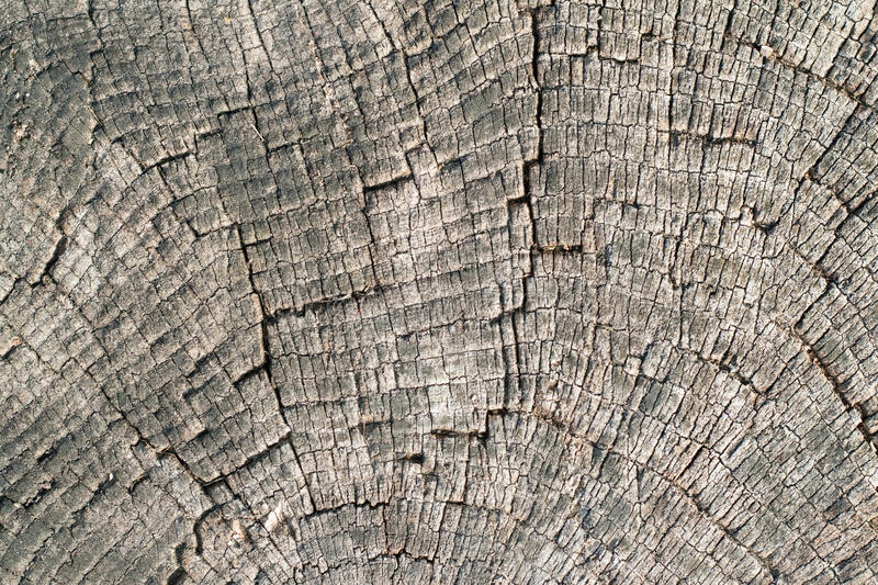 Download Old wood cut texture stock image. Image of industry, nature - 16474293