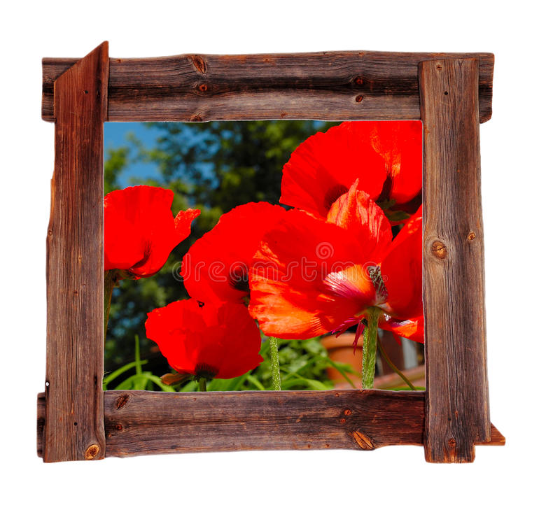 Old Wood Frames Spring Poppies Stock Images