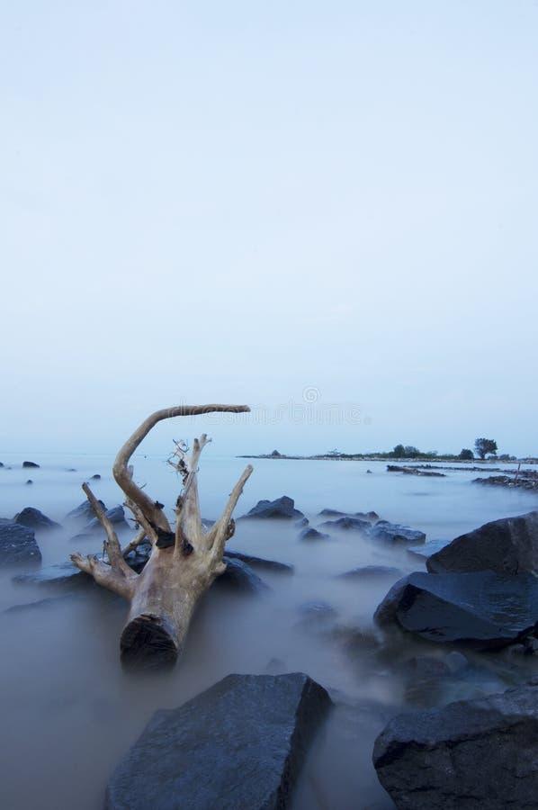 An old wood at marina beach semarang stock photography