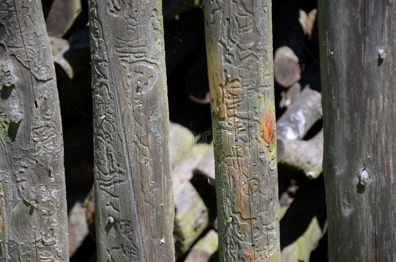 Old wood planks