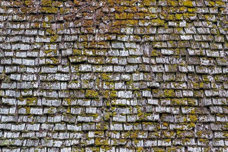 Old wood roof surface with green moss on it background texture royalty free stock images